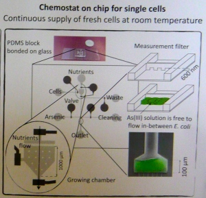Scheme of the Chemostat on chip, showing the different compartments